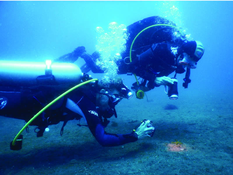 Camiguin Volcan Beach Eco Retreat Dive Resort Contact